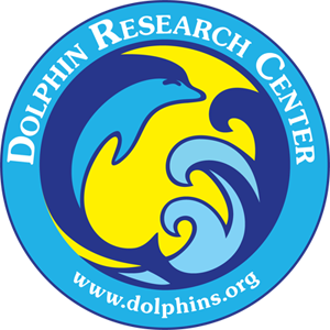 dolphins.org